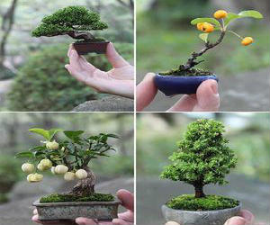 Little Cute Bonsai Trees