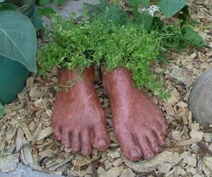planter feet