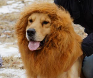 Large Pet Dog Lion Wigs