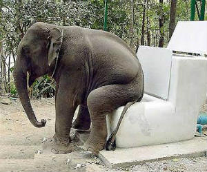 elephant taking crap