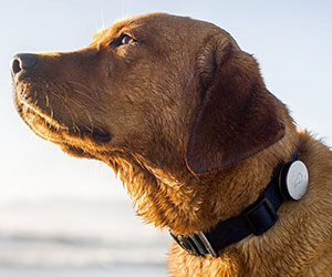 Dog Activity Monitor