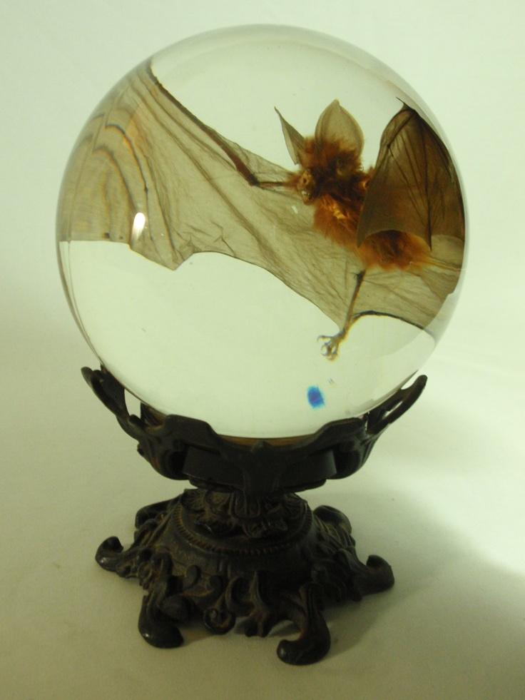 Bat In Flight Wet Specimen In Large Glass Sphere