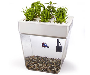 Desktop Aquarium Herb Garden