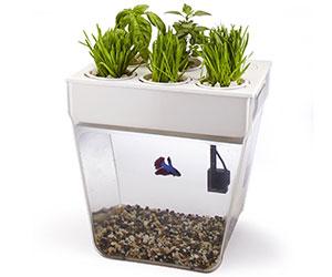 Desktop Aquarium Herb Garden