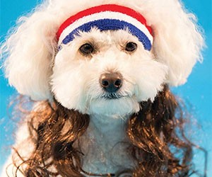 Dog Mullet Headband With Hair Extensions