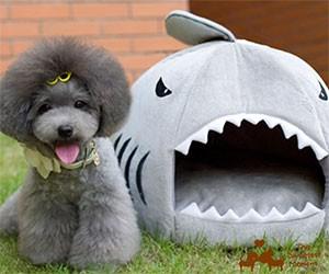 Shark Pet House