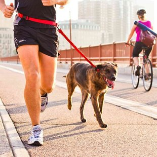 Stunt Puppy Stunt Runner Hands-Free Dog Leash
