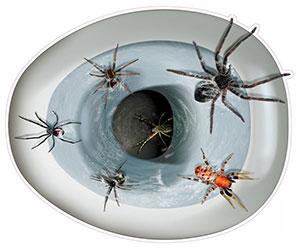 spider toilet topper