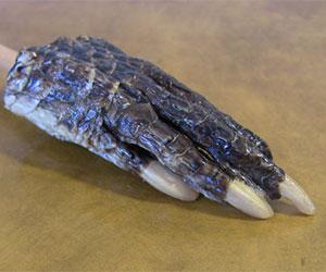 aligator back scratcher
