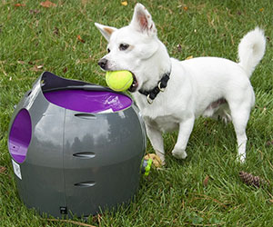 Automatic Ball Launcher for Pets