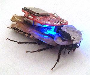 The RoboRoach Bundle